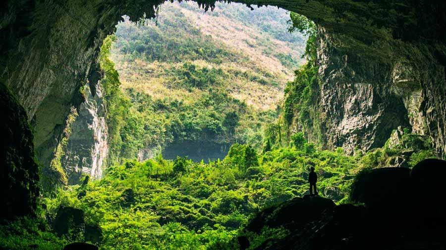 Rừng nguyên sinh tại hang Sơn Đoòng
