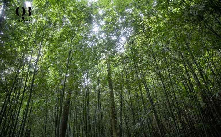 Băng qua qua rừng trúc rậm rạp để tới Thác 9 Tầng