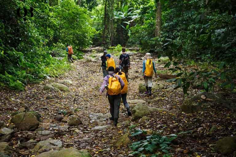 Để đến Hang Én du khách băng qua khu rừng nguyên sinh rậm rạp xanh tốt và tận hưởng không khí trong lành mát mẻ