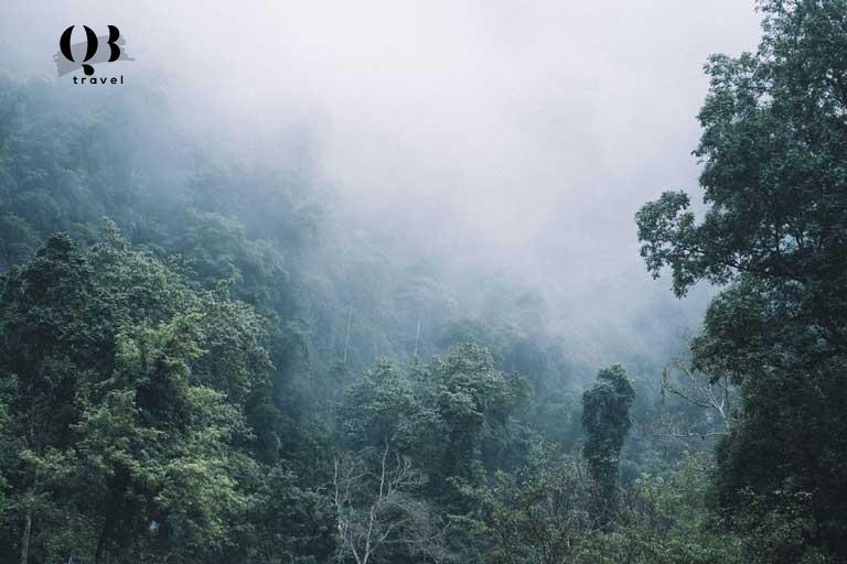 Khung cảnh núi rừng mùa đông huyền ảo trong màn sương mỏng vô cùng thơ mộng