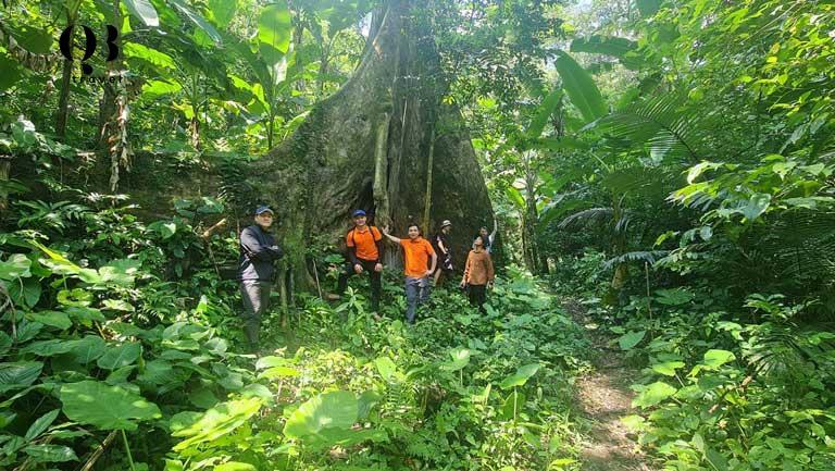 Khu rừng xanh của Khe Nước Trong