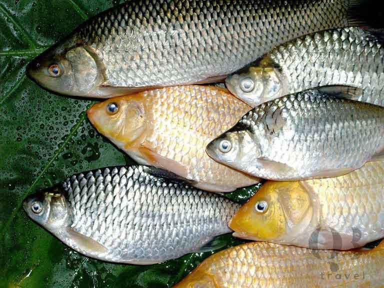 Cá diếc là loài sản vật dân dã ở sông Son