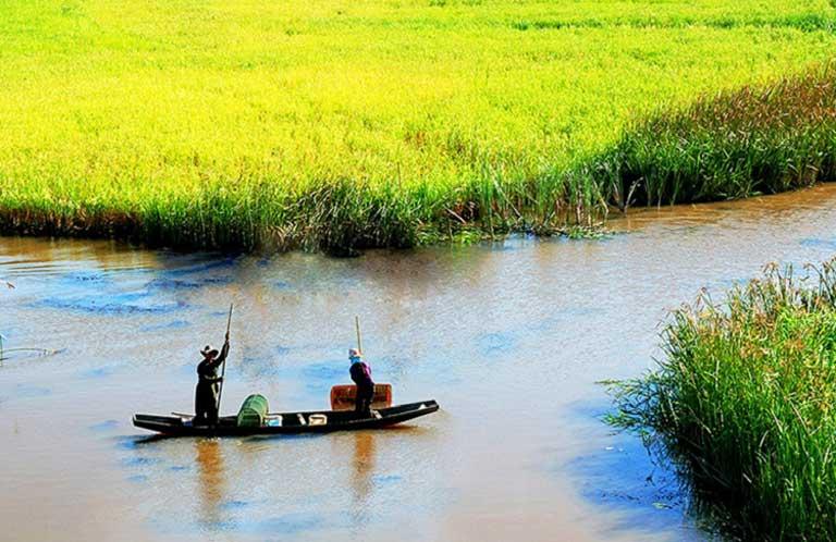 Phá Hạc Hải với sắc vàng ươm của lúa mùa