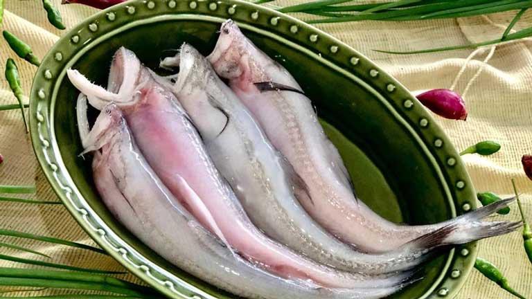 Sử dụng cá khoai điều độ sẽ mang lại nhiều công dụng điều trị bệnh