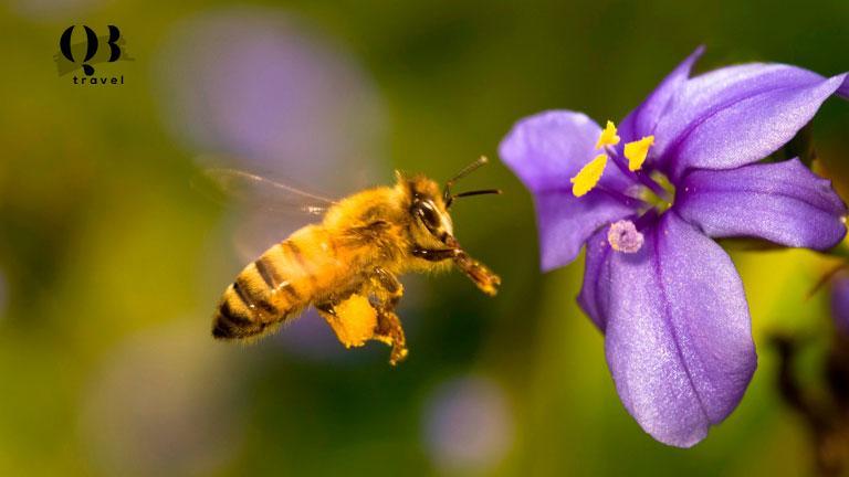 Ong hút mật từ các loài hoa và thảo mộc tự nhiên