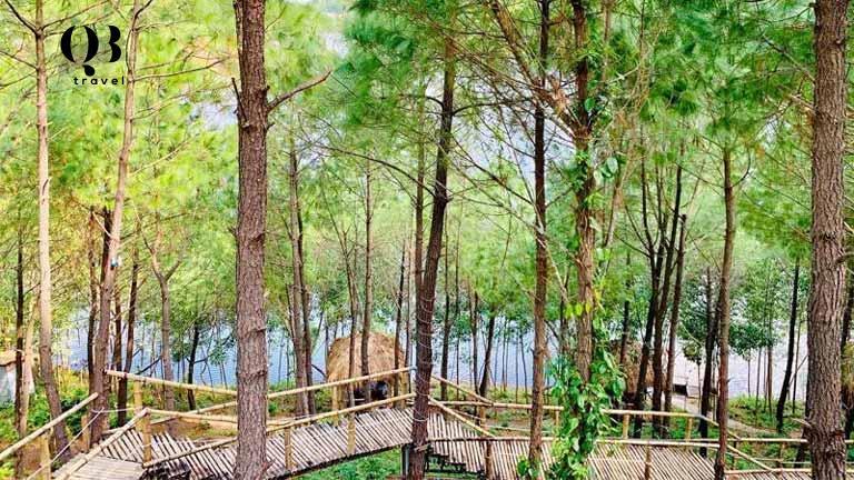 Chiếc cầu tre độc đáo, xuyên qua rừng thông dẫn đến quán cà phê xinh xắn trên đỉnh đồi