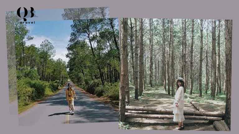 Vẻ đẹp thơ mộng của rừng thông, địa điểm sống ảo cực chất