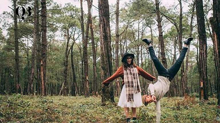 Vẻ đẹp mộng mơ của rừng thông Quảng Bình ngay giữa lòng Đồng Hới