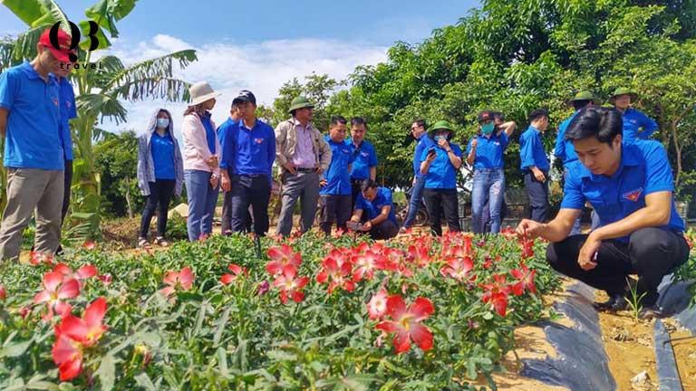 Thu hoạch sâm bố chính ở Quảng Bình