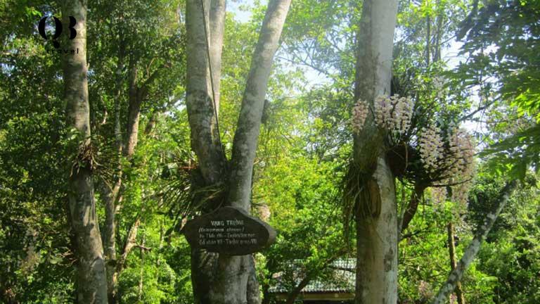 Phân khu rừng cây quý tại Vườn thực vật Phong Nha Quảng Bình