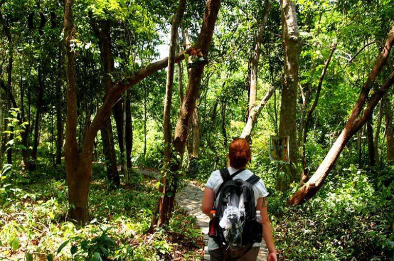 Du khách được trải nghiệm nhiều hoạt động thú vị trong khuôn viên Vườn thực vật Phong Nha Quảng Bình