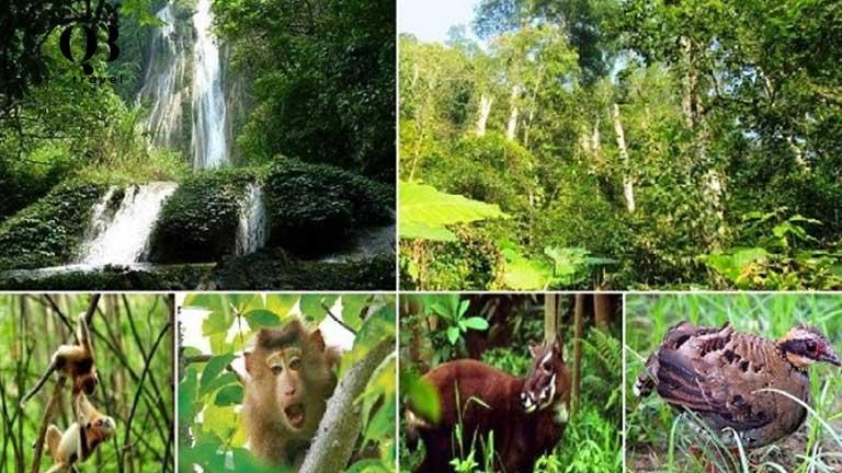 Hệ thống động thực vật phong phú tại vườn quốc gia Phong Nha Kẻ Bàng