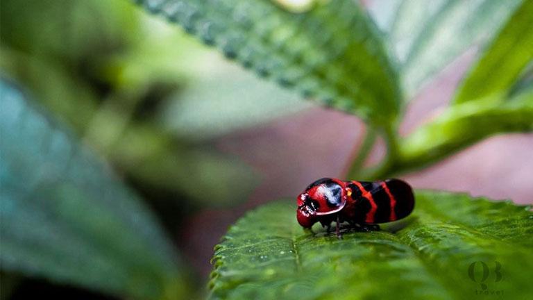 Hệ sinh thái động thực vật đa dạng ở vườn quốc gIa Phong Nha Kẻ Bàng