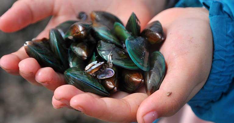 Vẹm biển vô cùng có lợi cho sức khỏe con người